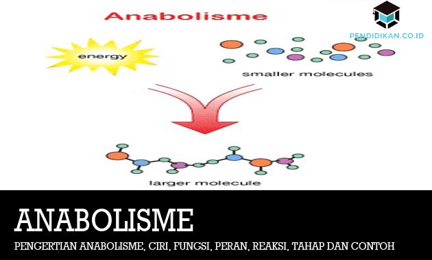 Pengertian Anabolisme