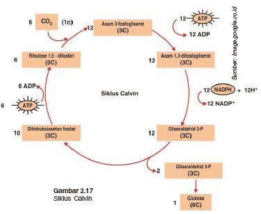 Proses-Anabolisme