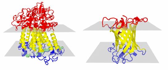 Protein-transmembran